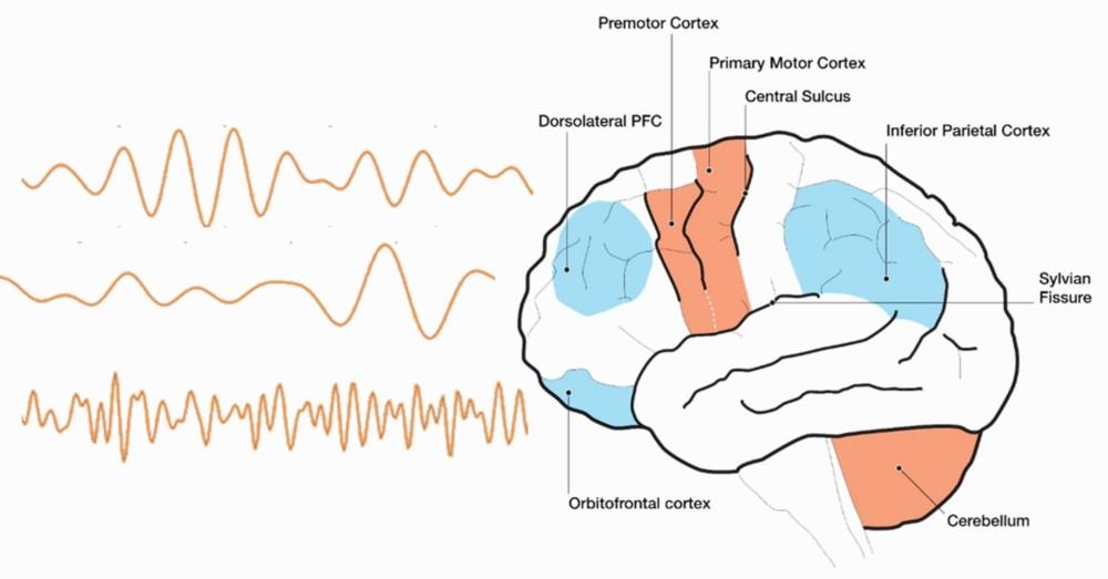 EEG Signals